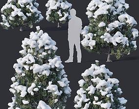 Pinus sylvestris Nr10 H1m-3m Winter Five tree 3D model