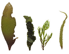 Green Algae Scanned Texture Pack - 16 Textures 3D model