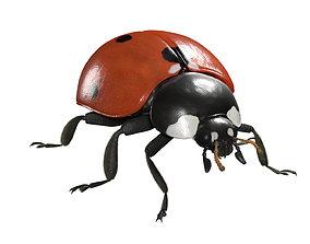 3D 2020 Ladybug