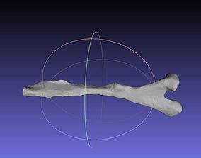 3D print model Psittacosaurus Left Ischium