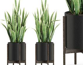 Plants collection 505 3D