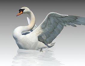 Mute Swan 3D asset