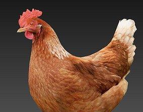 3D model game-ready Hen chicken