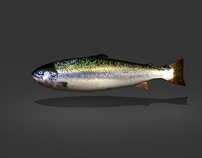 Norwegian Salmon 3D model