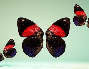 Butterfly 19 3D model