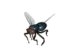 3D printable model Fly insect