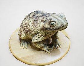 Green Frog 3D model