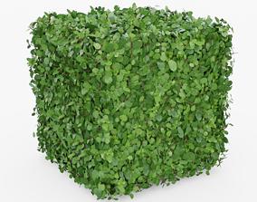 3D asset Topiary Bush Square