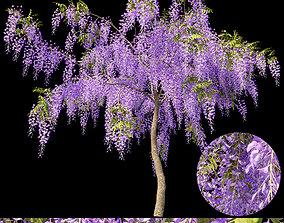 Fabaceae - Wisteria sinensis 1 3D model