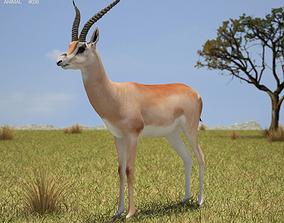 3D asset Grant s Gazelle Nanger Granti
