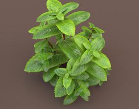 3D model mint herb plants