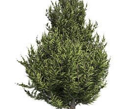 Hollywood Juniper Tree 02 3D model