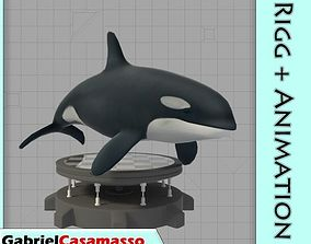 Killer Whale 3D asset animated