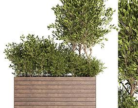 3D asset Outdoor plant 10