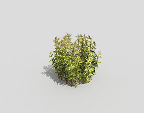 forest Low poly Plant 3D model realtime