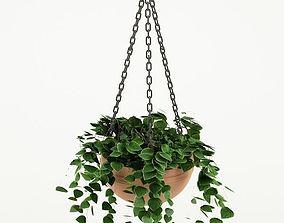 3D model hedge Plant