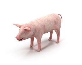PIG MODEL 3D mammal