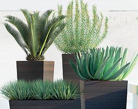 Plants 82 3D model
