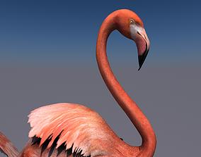 Flamingo animated 3D model