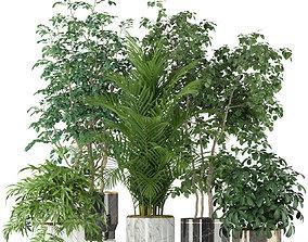 Plants collection 204 3D
