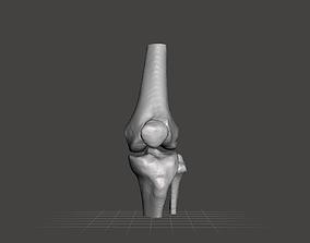 3D model Left knee joint - female