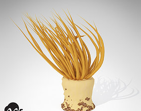 3D model XfrogPlants Tube Anemone