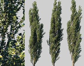 Poplar pyramidal collection leaves 3D