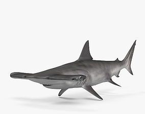 3D model Smooth Hammerhead HD