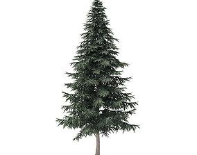 Spruce Tree 7point8m 3D model