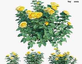 3D model Golden celebration rose set 02