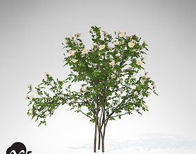 3D model XfrogPlants Dog Rose
