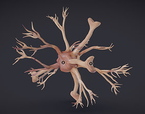 Nerve glia Astrocyte 3D model