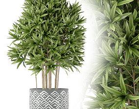 Plants collection 224 3D
