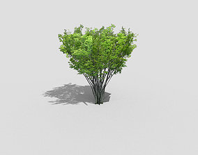3D model game-ready low poly tree plant