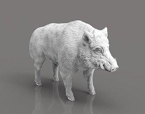 Boar 3D Model art