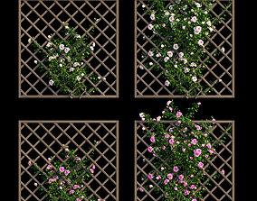 3D model Rose plant set 15