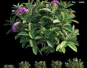 Ixora plant set 38 3D model