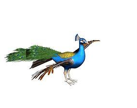 3D model Peacock Rig
