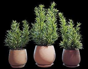 Set of plants 07 3D model