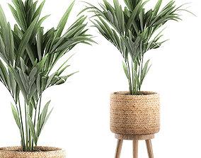3D Decorative palm in a in a basket 622