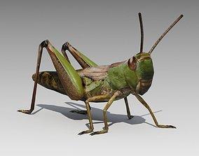 Grasshopper Animated 3D model