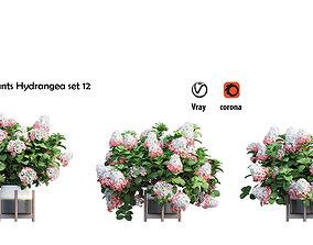 Plants Hydrangea set 12 3D