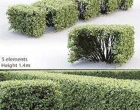 3D model Cornus Alba Elegantissima Hedge 03 nature