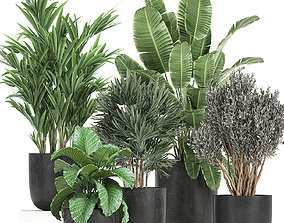 Collection of decorative plants in flowerpots 813 3D model