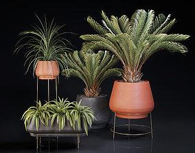 Plants Collection 01 3D flowerpot