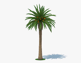 3D plant Date Palm