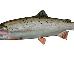 3D model rigged Trout