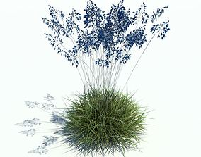 Blue Leafy Plant With Green Grass 3D model