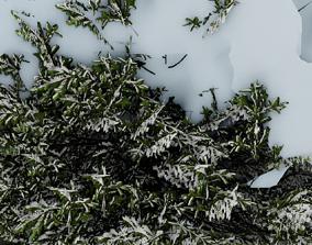 3D model Tree Picea-abies winter