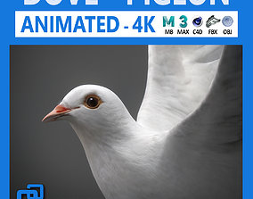 3D White Dove Animated